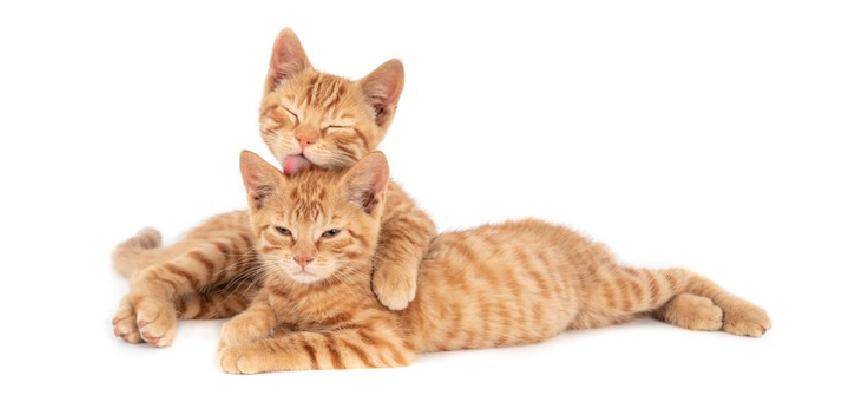 piensos gatos